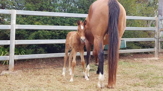 Looking forward to foals? Our top tips for foaling this season!