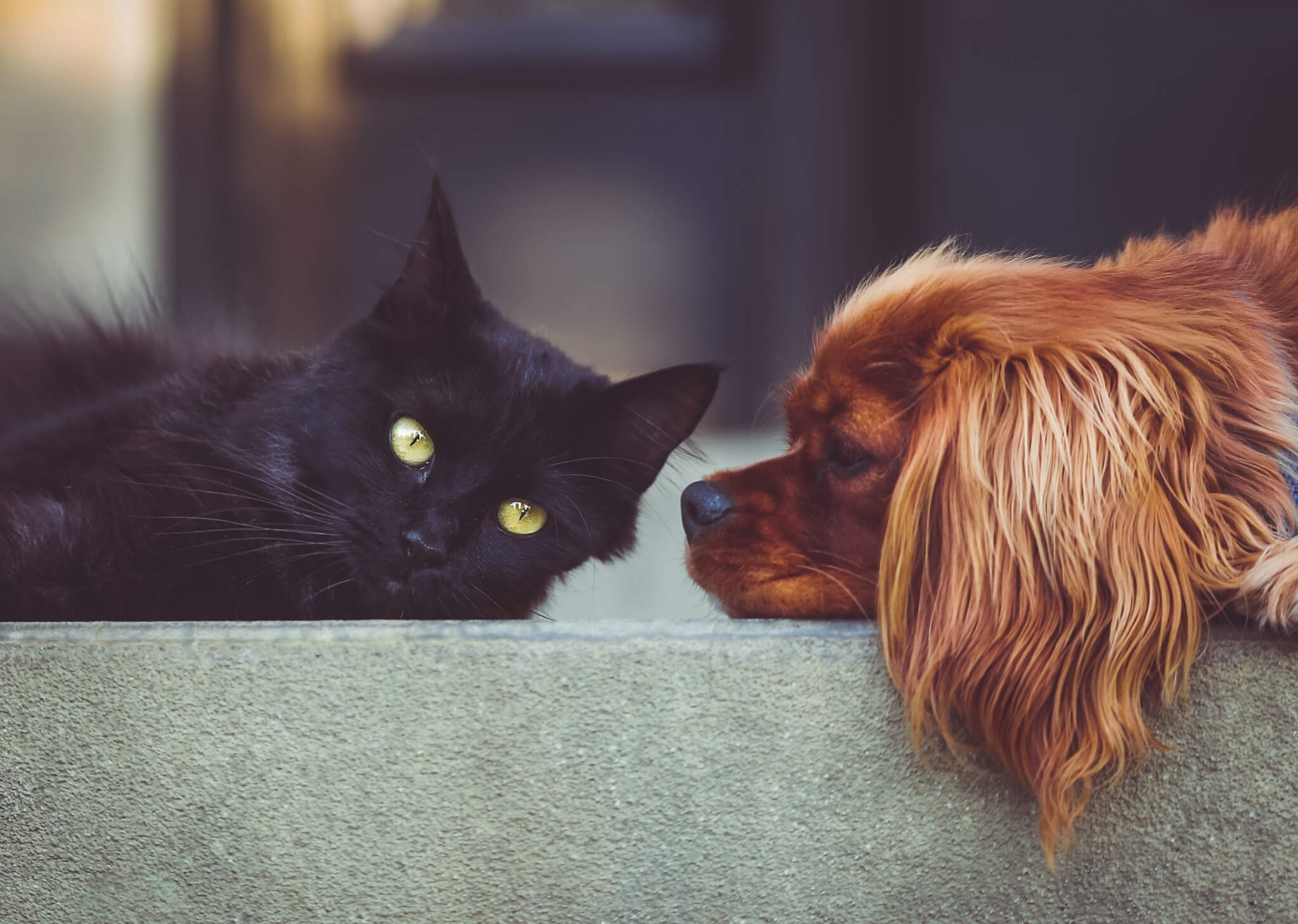 Canva Cute Dog And Cat Together Tableland Veterinary Service