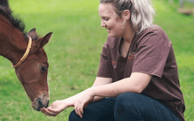 Everything you need to know about breeding your mare