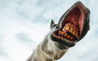 When was your horse's last dental checkup?