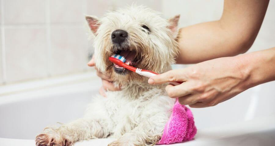 Looking after your pet's gums at home